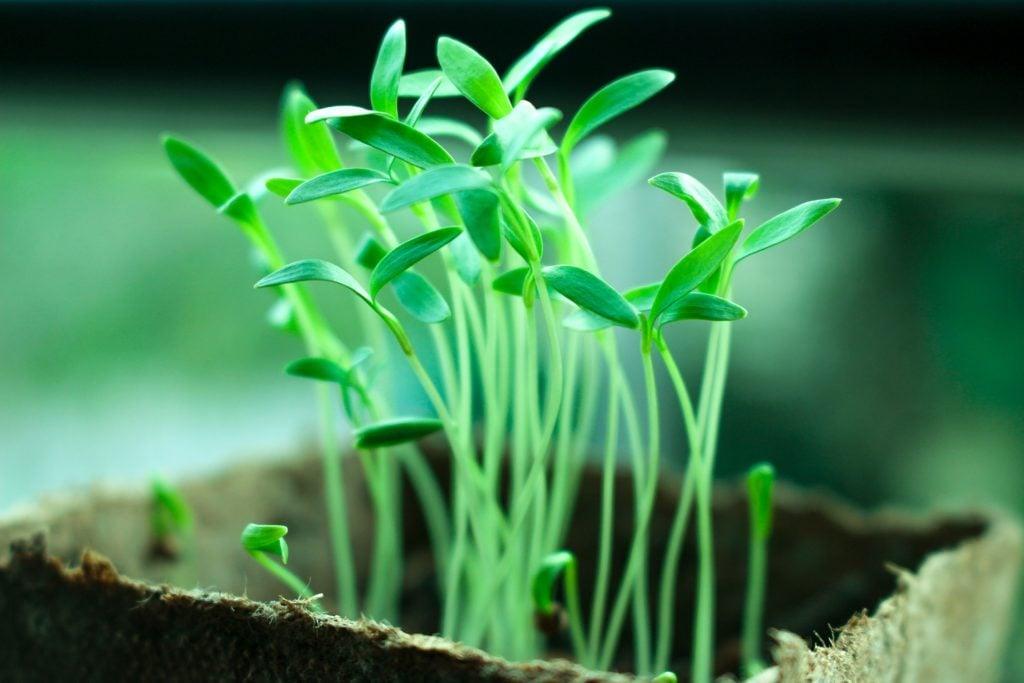 plants-2411458_1920-1024x683