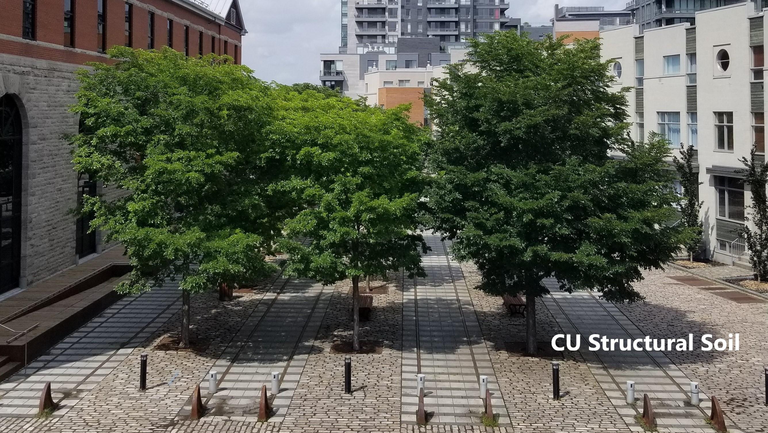 Square Dalhousie- Montreal 2018
