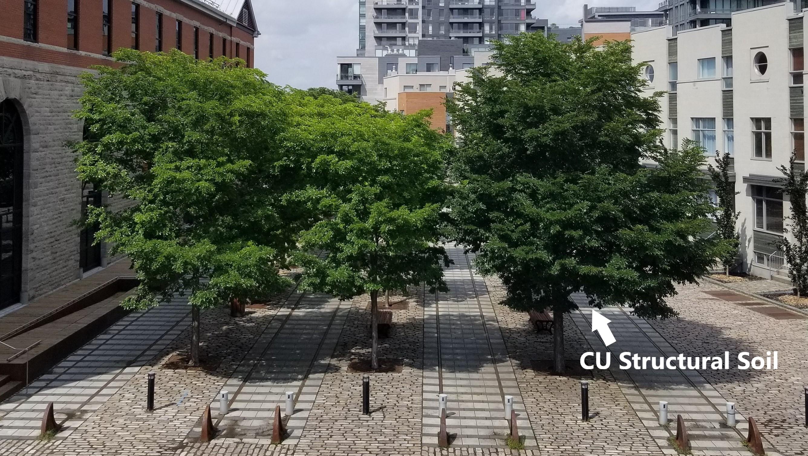 Square Dalhousie- Montreal 2018-1